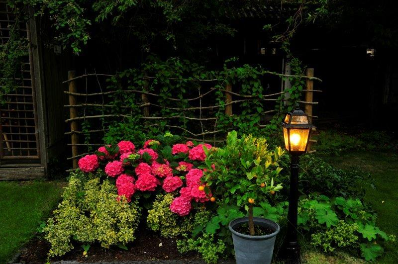Bijvriendelijke-tuin-in-Warder-26
