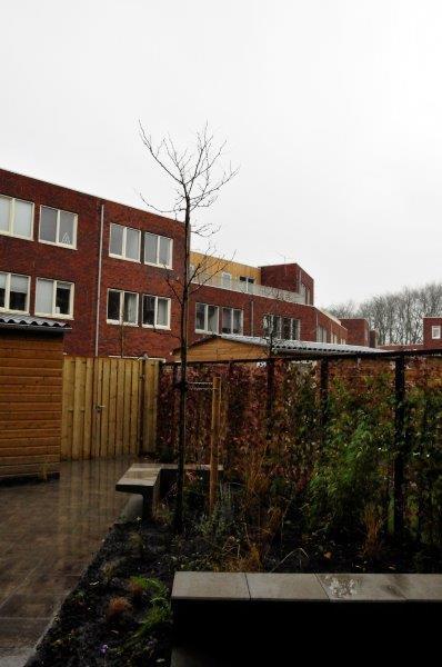 Amsterdamse-achtertuin-met-grassen-3