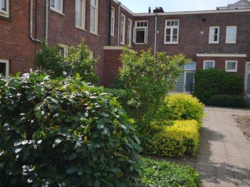 Binnentuin in Haarlem